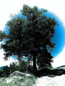 Árbol dibujo