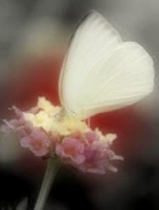 Una mariposa en mi mano
