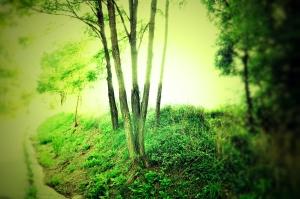 La definitiva luz_01