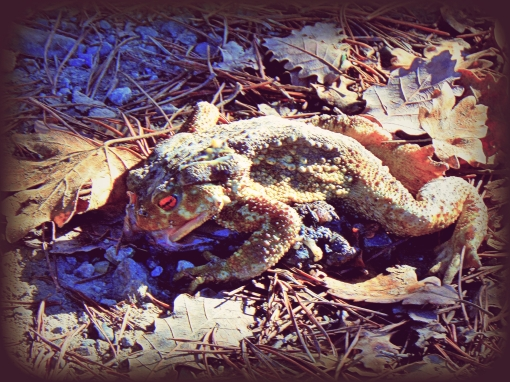 Un sapo muerto 2