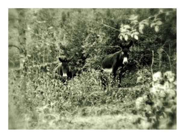 burros-2-ruta-fuentes-oct-2016-fuji