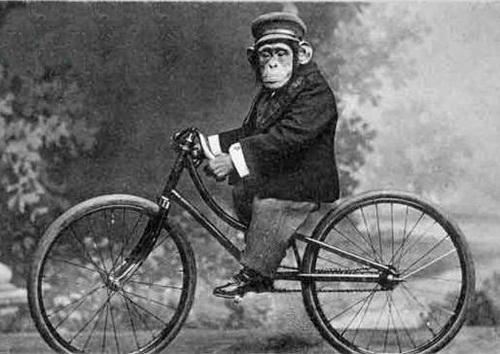 Ciclistas domingueros