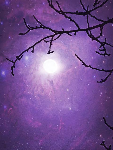 Imagen que contiene luz, pájaro, iluminado, noche  Descripción generada automáticamente